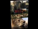 Дикие животные 24 часа / Поле битвы - Скалистые горы / 2016 / Full HD