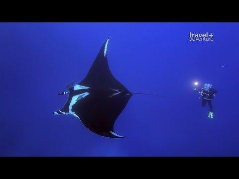 Подводное приключение у островов Сокорро.