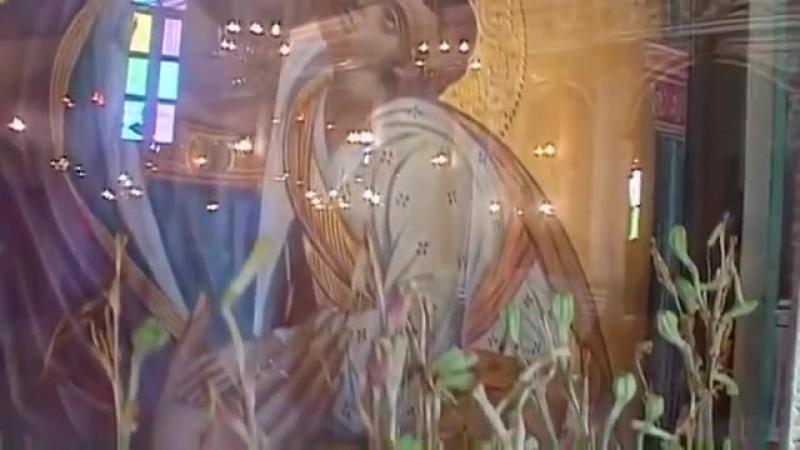 Оживающие Лилии и Змеиные Нашествия в Кефалонии 2009