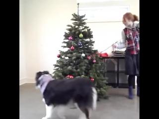 Пёс наряжает ёлку