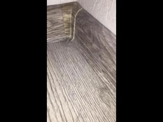 Муравьи в ЖК Государев дом