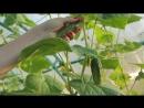 Магазин_овощи-фрукты