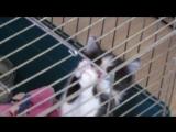 котенок со стекловаты