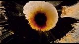 Tree of Life ~ Lacrimosa