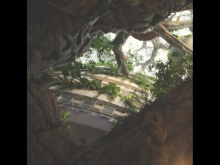 Уникальный ботанический сад в районе CityWalk
