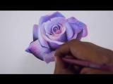 как нарисовать лавандовую розу цветными карандашами