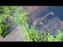 Любопытная жаба