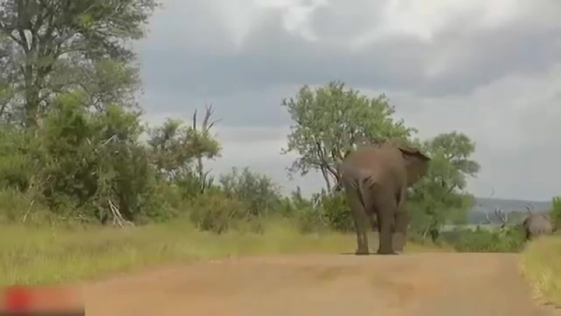 Alan Fogarty Mother Elephant Defends Her Baby From Two Hippo Elephants rescue Elephants from Animal Attack