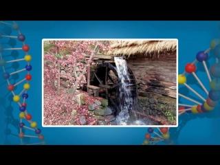 Понятие о биогеоценозе и экосистеме