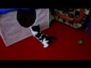 Котята нашей Муси, отдаём в добрые руки .