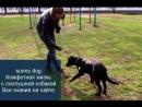 гиперактивная собака развитие концентрации
