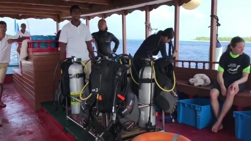 Выдвинулись изучать подводный мир 🐡 🐠 🐟🐙🦑