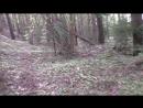 Сморгонь Лес 7 Холм 1 Блиндажи