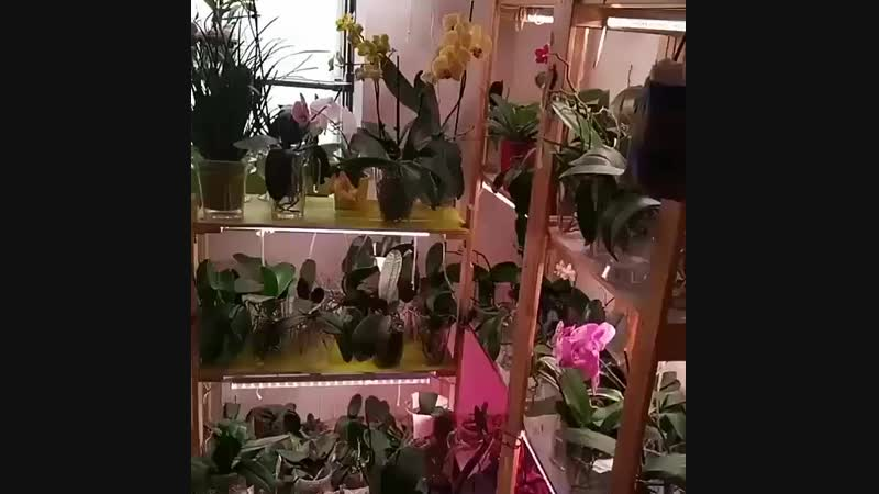 орхидеи без коры