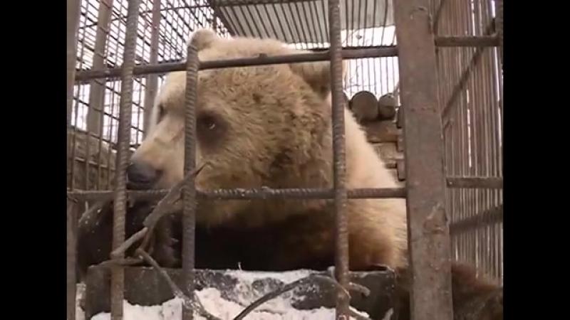 В уфимском вольере есть медведи, которые не впадут в зимнюю спячку