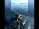 Бультерьер скользит по льду на Байкале