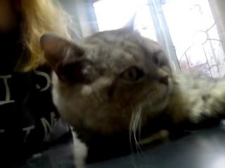 Кот в клинике