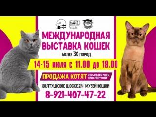 Международная выставка кошек 14-15 июля!