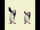 танец пингвинов и музыка😀 весело