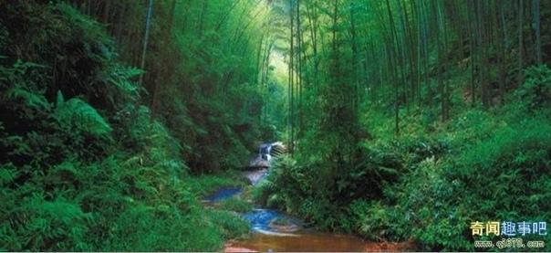 Долина Черного бамбука - одна из сильнейших аномальных зон Земли На Земле немало загадочных зон, где наблюдаются удивительные явления и странные происшествия, не поддающиеся удовлетворительному
