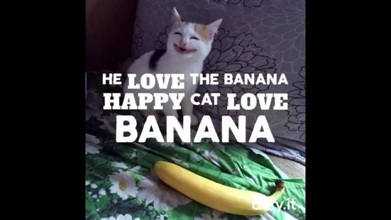 Cat love banana