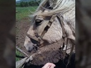 "O k s a n a M a r t y n o v a✈ on Instagram ""Полтора часа прогулки на коне. По лесу, через речки, по дорогам с трясиной, через кусты и просто по п..."