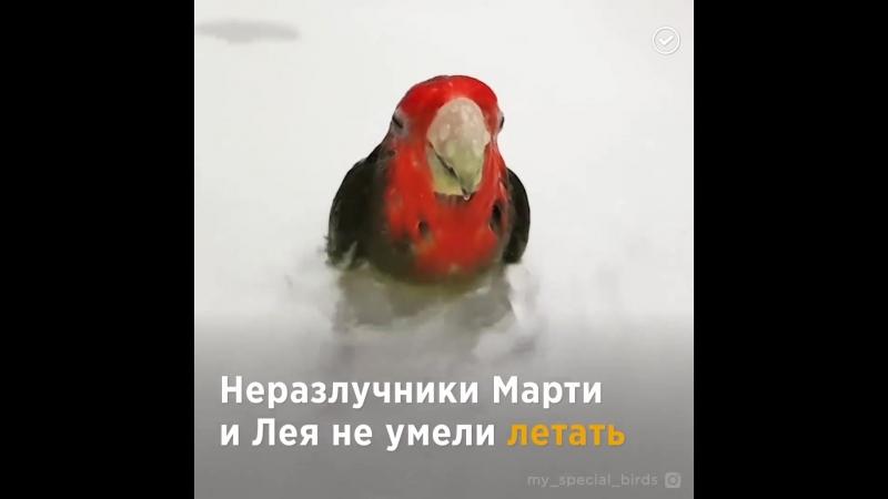 Современный Айболит - добрый доктор из Подмосковья дарит вторую жизнь диким и домашним птицам.