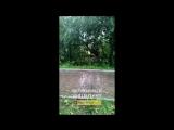 Златоуст. Неадекват в детском парке Крылатко (23.08.18)