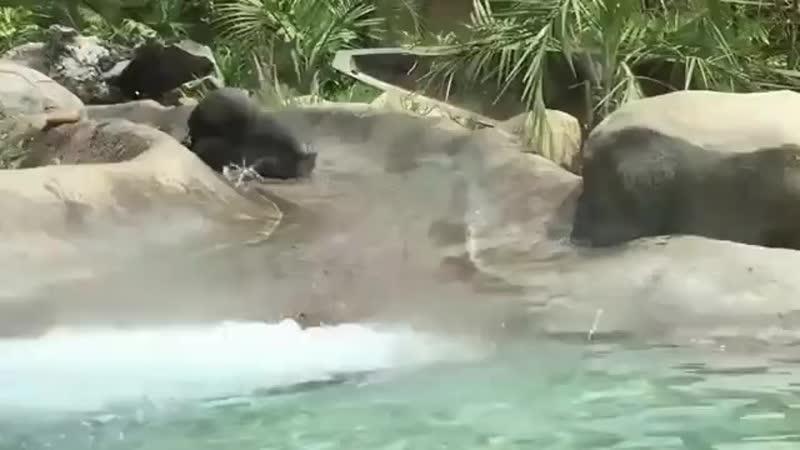 Все в аквапарк!