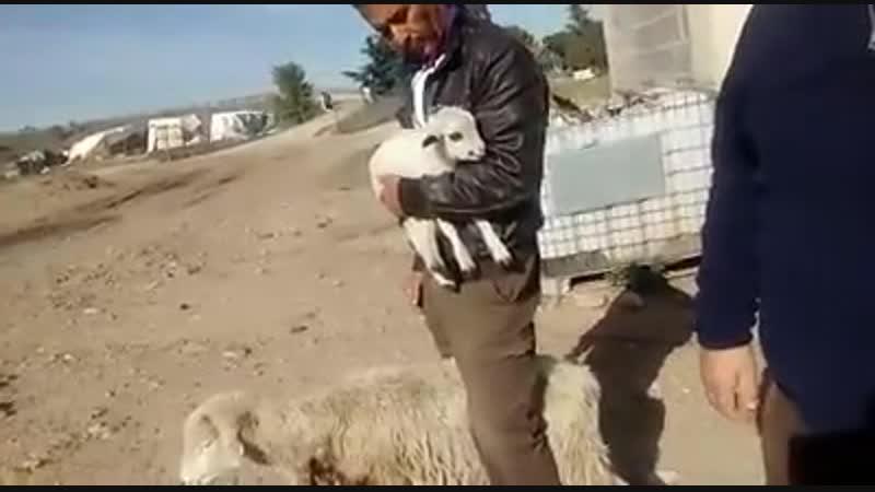 El daño que causan los perros y sus inconscientes dueños al salir al campo PRIVADO