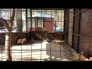 Экопарк Зоолесье2