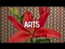 Arts Spring 12 05 2018