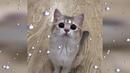ТЕСТ НА ПСИХИКУ- Смешные Коты и Кошки - Приколы с Котами 2018