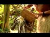 Что произошло , после того как , Аборигены дикого племени впервые увидели как осветлить волосы