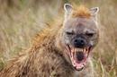 Спецвыпуск Сила хищников ! Документальные Фильмы с National Geographic