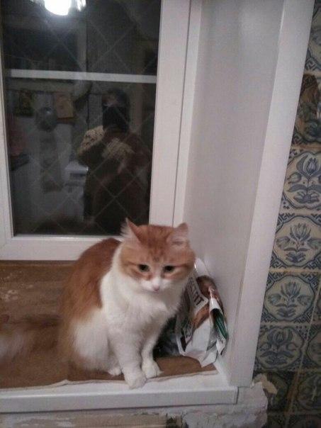 Добрый вечер. Ищем заботливые руки и новый дом котику. В связи с перее