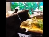 Котики рыбачат в аквариумах