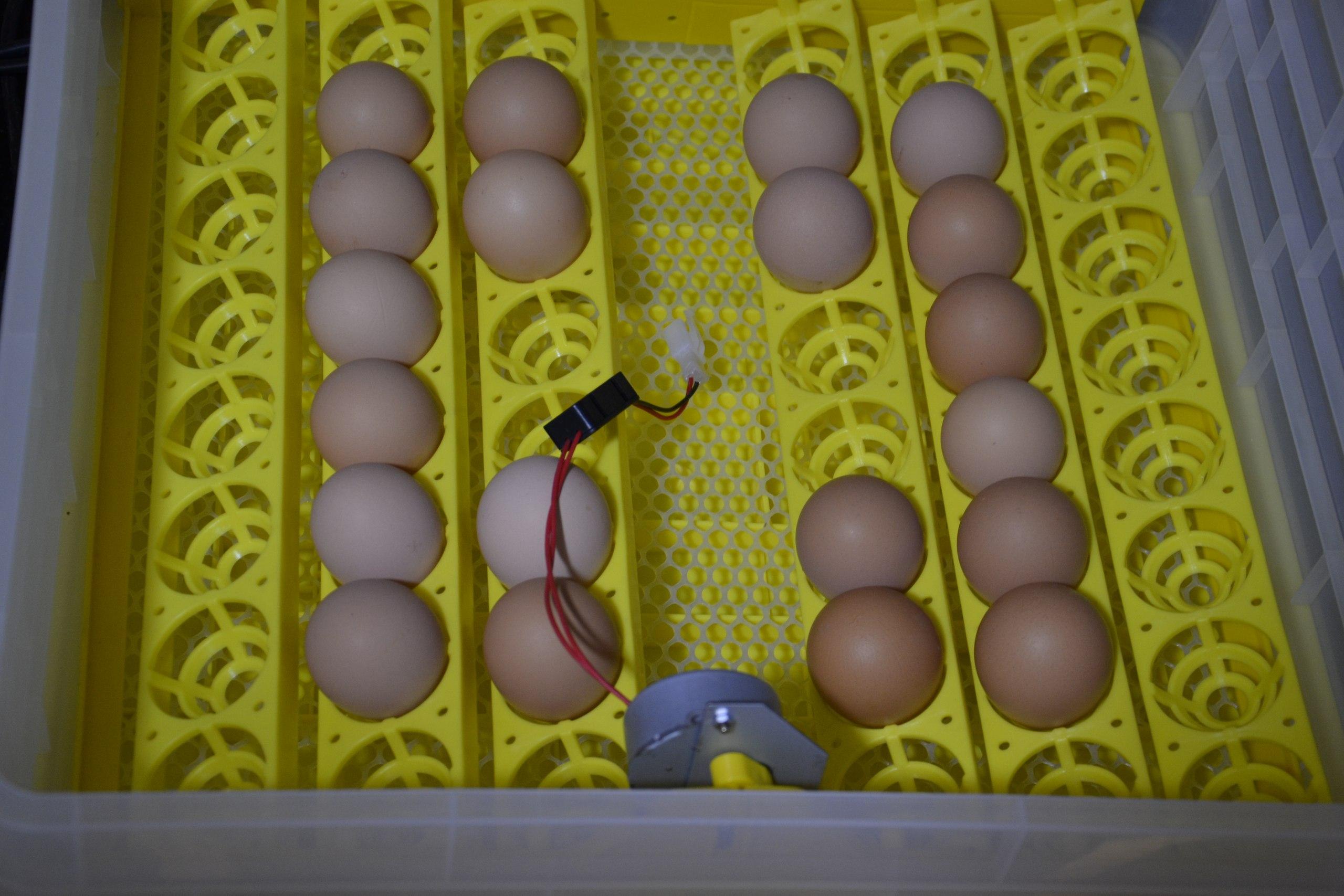 РАсположение яиц в инкубаторе И-96