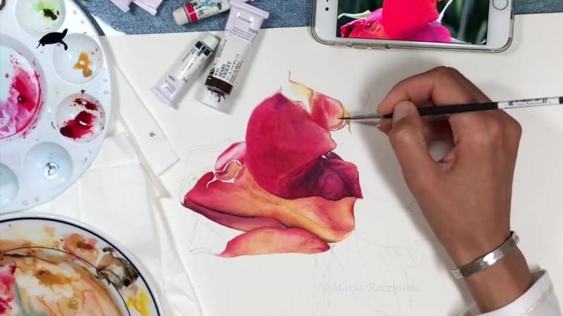Реалистичная роза акварелью