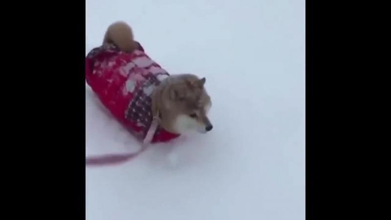 Снежная прогулка. Видео приколы