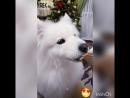 Год счастливой Собаки на подходе