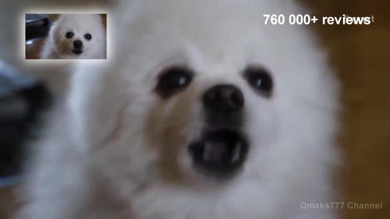 TOP 10 GABE THE DOG_REMIX_ Топ 10 Гейб собак Ремикс_ Ripgabe