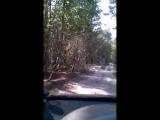 Дорога с Печарки к Золотаревке. Примерно 2\3 маршрута. В самых убиенных местах было не до съемки...