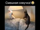 про животных прикол