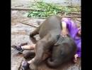 Слоненок играет с работниками заповедника