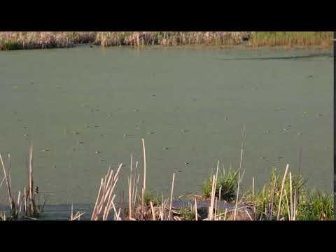 Долгино болото (7 мая 2018)