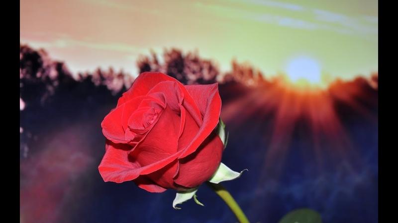 Анапа Парк Ореховая роща и романтичный закат