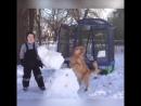 Детки соперники собакенов