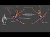 SLs Renverse Tilt Jump Ronverse Dance Ballet Anatomy Kinesiology