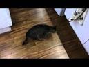 Жизнь слепого кота Кроша